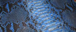 deep blue Raffaello python