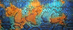 Tropical python color